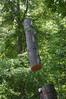 DSC_2279 (markpeterson1) Tags: jdtreepros redoak treeremoval