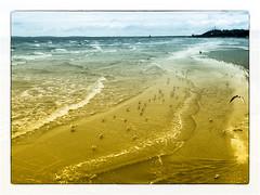 Strand Heringsdorf (Heinze Detlef) Tags: meer ostsee möwen wasser strand sand heringsdorf usedom landschaft