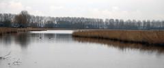 Luntershoek - Hulst (roland_tempels) Tags: luntershoek thenetherlands heteiland zeeland nature water trees