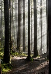 The first time I saw the sun on a hike in the Pacific Northwest it looked like this (plottsdaniel) Tags: wallacefallsstatepark dslr hd create explore nature outside forest sunbeams sunbeam sun woods nikond7100 nikkor nikon america washington pacificnorthwest pnw northamerica