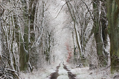 (nettisrb) Tags: weg strase allee snow winter landschaft landsscape снег зима bäume trees linden lindenallee wald waldweg лес