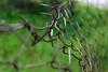 Escape (Argyro Poursanidou) Tags: escape fence macro bokeh wire