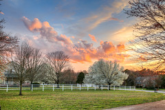 Yard - sunset - Anderson S.C. (DT's Photo Site - Anderson S.C.) Tags: canon 6d sigma 35mm14 art lens andersonsc southcarolina hdr tonemapped scenic rural southern america usa landscape sunset blosson bradford pear colorful southernlife fence house home maple twilight