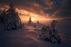 Firechild (lonekheir) Tags: norge norway mist winter snow forest atmosphere mood light trees