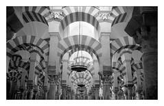 (floguill) Tags: cordoue mosquée cathédrale leica mp summilux 35mm preasph kentmere 100 ilfosol
