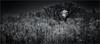 moonWatch (josef...) Tags: aoi elitegalleryaoi bestcapturesaoi