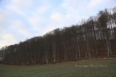 1802tierra015 (Stefan Heinrich Ehbrecht) Tags: terra tierra landschaft paisaje landscape pays winter invierno schnee snow nieve buche buchenwald beech fagus