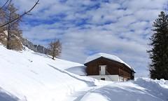 colonie de Loutze (bulbocode909) Tags: valais suisse coloniedeloutze chalets montagnes nature hiver neige arbres mélèzes nuages sentiers sapins bleu groupenuagesetciel