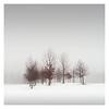 Winter Poem IV (Vesa Pihanurmi) Tags: trees minimalsm winter nature snow espoo finland