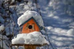 Snow on bird house (ElisaArduini) Tags: bird house snow palombara palombarasabina italia italy neve photography fotografia flickr photo photos foto nikon d3200 nikond3200