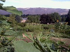 Osborn Community Garden_Lewiston (bin.liang2010) Tags: garden