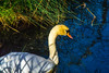 DSC_6378.jpg (b0n2a1) Tags: 2017 grandcirclecruiseline hunawihr naturoparcexcentredereintroduction rhineriver routederibeauville storks animalpark swanmvrhapsody