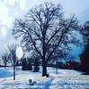 Un arbre en hiver .. (Dare2drm) Tags: couchédesoleil sunset soleilcouchant pontminto mintobridges arbre djfotos parc ciel neige hiver winter bordeleau