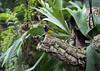 Diamantes (torresgarciac) Tags: naturaleza nature pajaros diamantes gold tropicales bird nido verde green mandarin