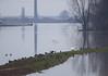 Hoogwater 2018 8 (megegj)) Tags: gert flood