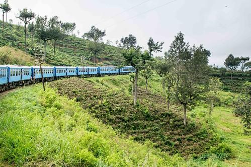 Train entre Ella et Nanu Oya