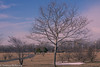 trees in liberty state park-00766 (Visual Thinking (by Terry McKenna)) Tags: libertystatepark statueofliberty crrnj