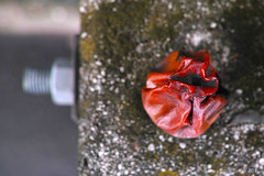 SDIM9716 Kopie (sven_fargo) Tags: austria abstract art streetphoto sigma street streetphotos detail dp2 details found farben wien österreich odd old object colourful colour color minimalism mnmlsm merrill minimal minimals metall nature urban vienna