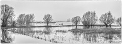 just passing by (stevefge) Tags: 2017 beuningen hoogwater waal flood winter uiterwaarden panorama landscape waterscape water monochrome zw zwartwit blackandwhite bw boats trees bomen nederland netherlands nl nature natuur gelderland reflectyourworld reflections rivers nederlandvandaag