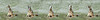 Coyote Howling Sequence (matt knoth) Tags: coyote howling howl bey sequence wild dog canine