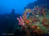 bvi 17 P8312435 (Pauline Walsh Jacobson) Tags: underwater scuba dive diving bvi water coral reef ocean sea marine life wideangle