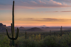 Saguaro Sunset (Darkness of Light) Tags: superstition wilderness mountain saguaro cactus lostdutchman peralta arizona az sony a7r2 a7rii gm gmaster puffycloudssunsetburn