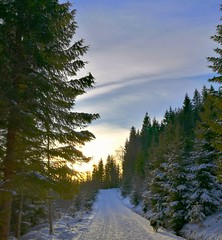 Mmmm, nice and peaceful (evakongshavn) Tags: loveisintheair unconditionallove mylove hiking swooschouthiking hikingdogs hikes winter winterwonderland winterwald winterlandscape snow hivernal hiver outside outsidepictures outdoors greencolor greenandwhite new light white sunlight sun