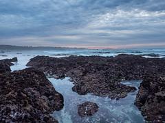 Asilomar (Tim Gupta) Tags: asilomar pacificgrove monterey california beach tidepools sunset bluehour