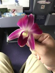 Orchids (Khunpaul3) Tags: thai airways b777200er hstjt tg621 aircraft aeroplane airplane aviation boeing royal silk class avgeek