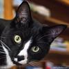 Eddie (HelenB55) Tags: cat nikon2470 d750