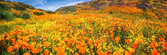 California Spring Wildflowers Superbloom Carrizo Plains National Monument! God Spilled the Paint Desert Wildflowers Super Bloom! Temblor Range! Elliot McGucken Fine Art Landscape & Nature Photography! Spring Flowers! (45SURF Hero's Odyssey Mythology Landscapes & Godde) Tags: california spring wildflowers superbloom carrizo plains national monument god spilled paint desert super bloom temblor range elliot mcgucken fine art landscape nature photography