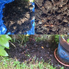 Compost Composite (Editor B) Tags: compost louisiana neworleans ourhouse unitedstates us
