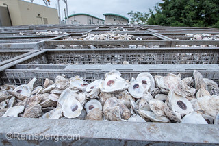 Metal trays filled to the brim with oyster shells, Cambridge, Maryland.