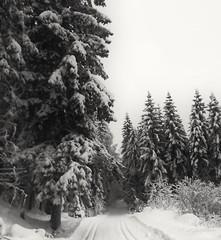 Swoooosch, off we go! (evakongshavn) Tags: bnwphoto bnw bw biancoenero blancoynegro svarthvit blacknwhite blackwhite blackandwhite snow snowfall winter winterwonderland winterwald winterlandscape wonderlandscape wonderfulworld wonderland woodland postcardsfromtheworld exploretheworld natur nature forest foret wald trees arbre hivernal hiver winterish landscape landschaft photooftheday unlimitedphotos skiing crosscountryskiing snowcovered dreamscape dream 7dwf