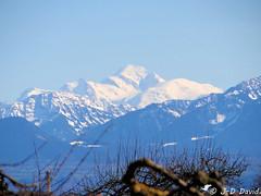 Mont Blanc 1 (jean-daniel david) Tags: montagne neige ciel cielbleu alpes montblanc arbre