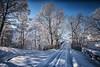 Winter trees (gallowaydavid) Tags: glenlyon winter snow snowscape trees scotland landscape