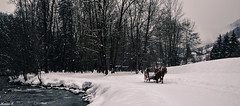 Like a fairytale (María Paula Montoya) Tags: france hiver winter snow neige flocon arbres trees sapin river lake rivier eau water nikon nikond5100 europa bornand lesalpes alpes cheval horse family famille vacance vacation trip photography photo
