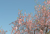 .:Colors:. (sofienrhouma) Tags: nature tagsforlikes tagsforlikesapp sky sun summer beautiful pretty sunset sunrise blue ontheroad day tree twilight clouds beauty light photooftheday love green skylovers dusk weather iphonesia mothernature zaghouan flowers