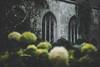 St. Dunstan-in-the-East (JavierAndrés) Tags: stdunstanintheeast iglesia church ruinas ruins parque park flores flowers ventanas ventanales windows textura texture pared wall enredadera vine verde green plantas plants nature naturaleza depthoffield profundidaddecampo dof pdc fondo background rincón corner relajante relaxing silencio silence thecity londres london england inglaterra reinounido unitedkingdom granbretaña greatbritain bokeh 50mm 14 f14 d800 nikon nikkor moody mood atmósfera atmosphere ethereal eterea hydrangea hortensia