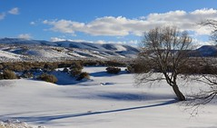 Wyoming Snow Day (carfull...in Wyoming) Tags: wyoming sweetwatercounty winter snow shadow tree mountains