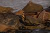 Cormorant (Tony Howsham) Tags: canon eos70d sigma 18250 os ness point lowestoft suffolk east anglia england bird sea rock wildlife