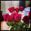 Roses. #Takoma #dc #dclife #washingtondc #iphone #iPhonemacro #macro  #flower #flowersofinstagram #besthusband #luckyme (Kindle Girl) Tags: iphone besthusband luckyme takoma dc dclife washingtondc iphonemacro macro flower flowersofinstagram