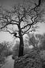 Naturens Hus (IR) (F. Neil S.) Tags: fog midwinter botanical garden landscapepark snow trees tower brooding blackandwhite blancetnoir monochrome fullspectrumconversion hoya r72 filter sony nex6 emount stockholm sweden