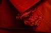 """La lettera scarlatta (encantadissima) Tags: """"macromondays"""" """"monochrome"""" lettera red rouge rosso fogliemorte macro"""
