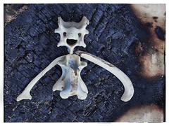 Happy Bones (Maggie's Camera) Tags: bones collage beach beachcombing happyface smiley