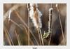 Pouillot véloce (gilbert.calatayud) Tags: commonchiffchaff passériformes phylloscopidés phylloscopuscollybita pouillotvéloce bird oiseau el rocio donana andalousie espagne