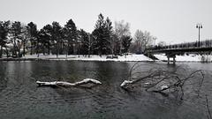 Havas tóparti életkép (Szombathely) (milankalman) Tags: lake winter branch grey