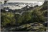 _DSC8200-aa (tellytomtelly) Tags: tofino vancouverisland britishcolumbia canada beach green grass moss rocks stream
