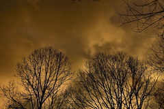 Early Morning Clouds (Rusty4344) Tags: clouds color outdoors outdoor trees tree northcarolina nikon morning