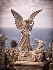 Waverley Cemetery 15 (Mariasme) Tags: waverleycemetery angel stfrancis challengeyouwinner cyunanimous matchpointwinner t614